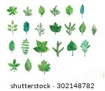watercolor fresh green leaves... | Shutterstock . vector #302148782