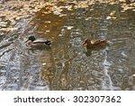 Pair Of Ducks Female Male...