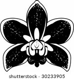black and white orchid | Shutterstock .eps vector #30233905