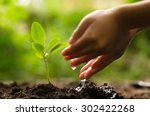 close up kid hand planting and... | Shutterstock . vector #302422268