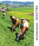 Cows among scenic hills in Emmental region, Switzerland - stock photo