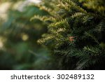 Needles Trees Macro With Spyder