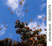 monarch butterflies on tree... | Shutterstock . vector #302604176