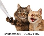 funny cats   self picture.... | Shutterstock . vector #302691482