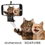 Stock photo funny cats self picture selfie stick in his hand couple of cat taking a selfie together with 302691488