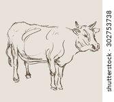 cow vector  hand draw sketch  | Shutterstock .eps vector #302753738