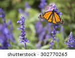 Stock photo butterfly monarch 302770265