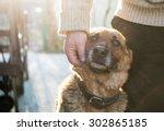 man and his german shepherd dog | Shutterstock . vector #302865185