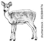 hand drawn realistic sketch of... | Shutterstock .eps vector #302884976