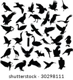 bird  vector  silhouette | Shutterstock .eps vector #30298111