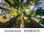 Stock photo muir woods national monument 303081878