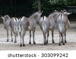 Zebras Shot From Behind ...