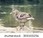 photo of the wild duck standing ... | Shutterstock . vector #303103256