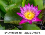 pink lotus in pot at garden | Shutterstock . vector #303129596