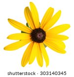 Daisy Yellow Flower Isolated On ...