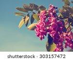 Beautiful Pink Garden Flowers...