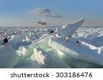 Drift Ice In Shiretoko ...