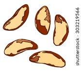 brazil nut.  hand drawn sketch. ... | Shutterstock .eps vector #303219566