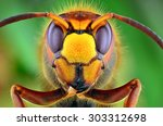 The Picture Shows Hornet  Vesp...