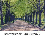 Green alley with trees in the park, retro color. - stock photo
