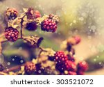 Vintage Photo Of Red Berries I...
