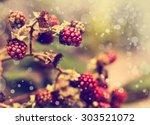 Vintage Photo Of Red Berries I...