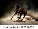 Stock photo black horse run gallop in dust desert 303528755