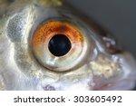 Fish Eye In Macro