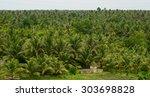 Coconut Plantation In Mekong...