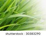 green grass | Shutterstock . vector #30383290