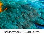 Macaw Bird Feathers