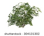 isolated plant collection | Shutterstock . vector #304131302