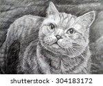 Manual Pencil Drawing Cat...