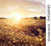 field of dry wild spikes... | Shutterstock . vector #304268582