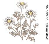 illustration of medical herbs.... | Shutterstock .eps vector #304310702