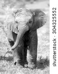 Stock photo cute baby elephant calf in this portrait image from south africa 304325552