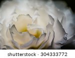 Small photo of close up white rose flower, blur and soft focus, resend noise