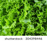 Fresh Lettuce Leaves  Close Up.