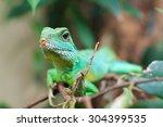 green water dragon | Shutterstock . vector #304399535