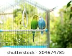 Cute Colorful Budgies In Cage ...