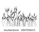 Hand Drawing Ears Of Rye