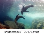 Seal Sea Lion In Baja...