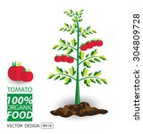 tomato  vegetables vector... | Shutterstock .eps vector #304809728