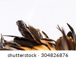 Abstract Of Feather  Feather O...