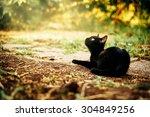 Stock photo black kitten 304849256