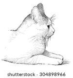 white domestic cat | Shutterstock . vector #304898966