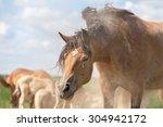 Horse Shaking Head After Havin...