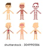 """my body""  educational anatomy... | Shutterstock .eps vector #304990586"