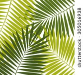 palm leaf  background ... | Shutterstock . vector #305016938