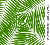 palm leaf  background ... | Shutterstock . vector #305016968